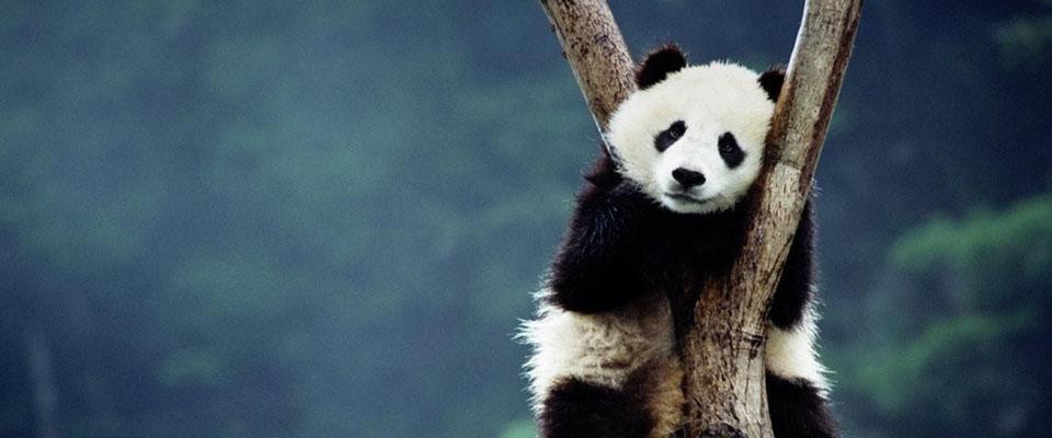 slider-panda